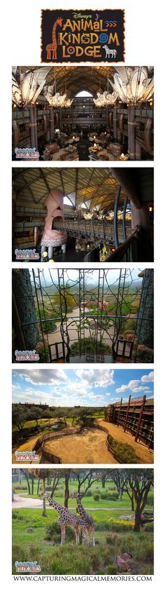 Jambo - and welcome home!  A tour of of Disney's Animal Kingdom Lodge  #DVC…
