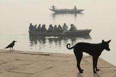 Sergey Maximishin. Varanasi, India. 2013  [::SemAp FB || SemAp G+::]