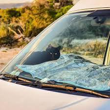 Image result for cat van life