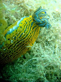 """I'm a nudibranch but don't call me a nudey branch."""