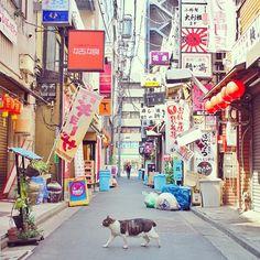 """""""新橋の猫 #cat #shinbashi #tokyo #alley"""""""