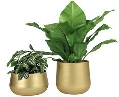 Here are some of the important things that you need to check with your metal flower pot. Indoor Flower Pots, Small Flower Pots, Indoor Plant Pots, Ceramic Flower Pots, Flower Planters, Garden Planters, Planter Pots, Cactus Plant Pots, Indoor Water Fountains