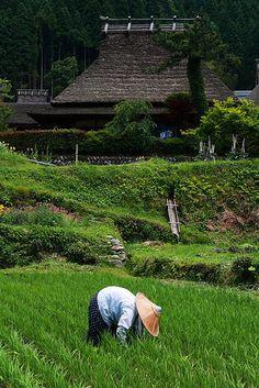 Rice Fields in Japan Minha família paterna tem uma casa em Nara e claro, com… Kyoto, Beautiful World, Beautiful Places, Samurai, Vietnam, Japon Tokyo, Art Asiatique, Country Landscaping, Viajes
