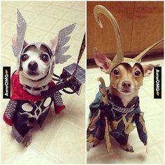 Loki and Thor! - http://www.awwomg.com/loki-and-thor-2/?utm_source=PN&utm_medium=AwwOMG&utm_campaign=SNAP%2Bfrom%2BAwwOMG.com