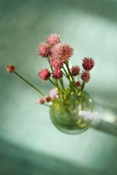 pretty little thing Pretty Little, Dandelion, Bouquet, Photo And Video, Rose, Flowers, Plants, Blog, Instagram