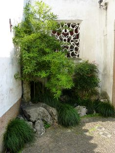 Bamboo and grasses Asian Garden, Chinese Garden, Outside Living, Outdoor Living, Chinese Courtyard, Courtyard Design, Japanese Garden Design, Spring Garden, Nature Photos