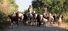 https://flic.kr/p/CV3QdB | india - a view of gujarat | India - A view of Gujarat