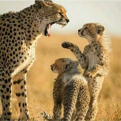 """ Let me explain Mommy ""............"