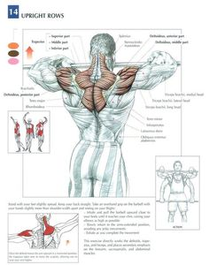 Upright Rows ~ Repinned by Crossed Irons Fitness: