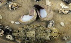 Pesquisadores desenvolvem camuflagem inpirada no molusco e no peixe-zebra