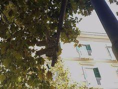"""Vomero, Capodanno: """"videosorveglianza a guardia degli uccelli?""""   Report Campania"""