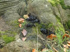 Any idea what this is. Small black fungi. Photo: Sue Fincham