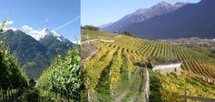 La musica nel vigneto: la viticoltura valdostana secondo la Maison Vigneronne Fr�res Grosjean - Vino - World Wine Passion
