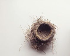 Is there anything more perfect in nature, than a bird's nest?