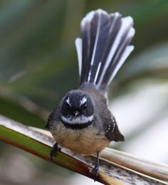 The secret life of birds The Beautiful Country, Beautiful Birds, Nz Art, Nature Journal, Sea Birds, Secret Life, Beautiful Children, New Zealand, Wildlife