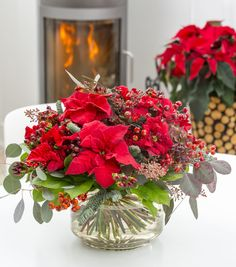 The truth about poinsettia: 10 myths exposed