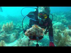 GoPro: Key Largo Dive trip - http://www.florida-scubadiving.com/florida-scuba-diving/gopro-key-largo-dive-trip/