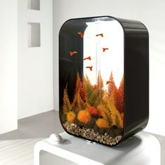 If you're looking for a high performance aquarium that is suitable for a wide variety of fish, then choose biOrb LIFE Mini Aquarium, Tropical Fish Aquarium, Aquarium Fish Tank, Aquariums, Aquarium Design, Aquarium Ideas, Fish Tank Design, Cool Fish Tanks, Salt Water Fish
