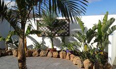 Exotic palm varieties in Finca Botanico´s patio