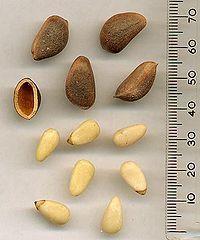 List of edible seeds - Wikipedia, the free encyclopedia