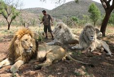 Kevin Richardson sprays his lions with water and citronella in their enclosure.  (AP Photo/Denis Farrell)