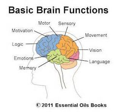 parts of the brain and its function - at your service
