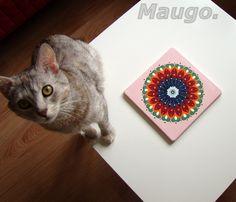 Mandala - decoration from plaster & my cat ;)