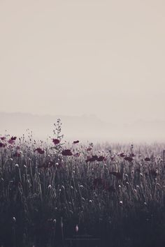 """There is a better world— There is another world.  Oh there must be.  Oh there must be.  — """"Asleep"""" The Smiths North Clothing, Clothing Co, Wild Flowers, Wildflowers"""