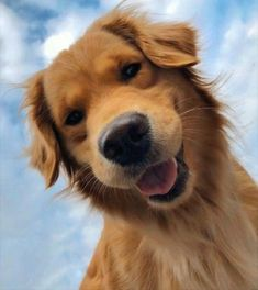 Cute Baby Dogs, Cute Dogs And Puppies, Doggies, Retriever Puppy, Dogs Golden Retriever, Baby Golden Retrievers, Cute Animal Photos, Animal Fun, Animal Pics