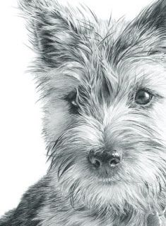 Nolon Stacey - A Pencil Artist's Blog: Cairn Terrier