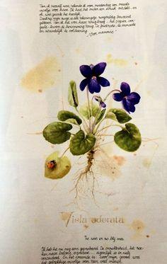 Nature Illustration, Illustration Artists, Botanical Illustration, Botanical Drawings, Botanical Art, Marjolein Bastin, Plant Art, Nature Journal, Dutch Artists