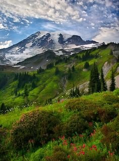 Mount Ranier, Washington state. Spent a lot of time hiking around this mt.