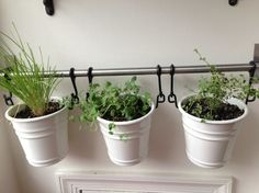 IKEA fintorp mounted on the wall with herbs in pots