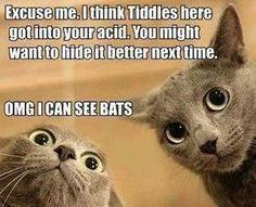 Soon he'll be cat-atonic...