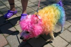 rainbow dog ☀opawz.com supply pet hair dye,pet hair chalk,pet perfume,pet shampoo,spa....