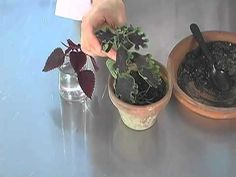 Start New Plants From Cuttings