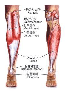 종아리 근육, 타마땅~~ 입니다. : 네이버 블로그
