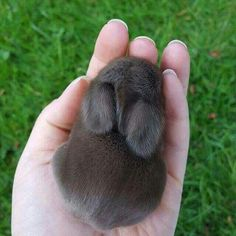 It's a tiny bunny