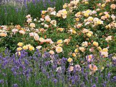 Gardening:Rose Garden Tips And Ideas Gardening Landscape Plans Garden Seating Planting Plan Climbing Florida Landscaping, Small Backyard Landscaping, Landscaping Ideas, Landscape Plans, Garden Landscape Design, Fine Gardening, Container Gardening, Layout Design, Hampton Garden
