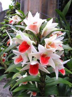 Nadir Görülen Çiçekler