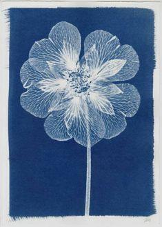 Open Flower Cyanotype by Henrietta Molinaro Cyanotype Process, Sun Prints, Alternative Photography, Foto Art, Blue Aesthetic, Botanical Illustration, Female Art, Printmaking, Art Photography