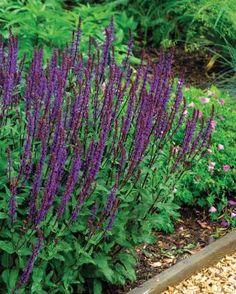 Hummingbird Favorites | Fine Gardening