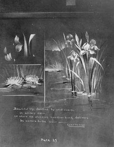 plantes aquatiques  nénuphar  et iris