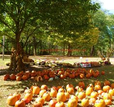 Pumpkin Market at the Historic New Garden Meeting House in Fountain City, Indiana.  www.YourLifeTodayMagazine.com