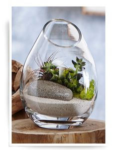 awesome 43 Popular Air Plant Display Ideas For Home Air Plant Terrarium, Garden Terrarium, Planting Succulents, Terrarium Ideas, Interior Garden, Interior Plants, Air Plant Display, Plant Decor, Air Plants