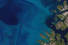 Blooming Norwegian Sea : Image of the Day : NASA Earth Observatory