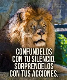 Lion Quotes, Motivational Quotes, Inspirational Quotes, Lion Of Judah, Kung Fu Panda, Epic Games Fortnite, Spanish Quotes, Life Motivation, Narnia