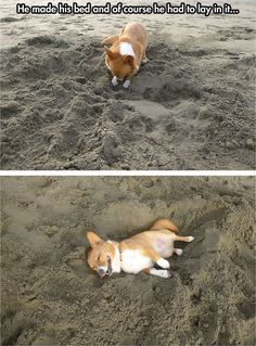 Corgi at the beach // funny pictures - funny photos - funny images - funny pics - funny quotes - #lol #humor #funnypictures