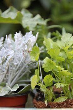Tilly's Nest: Fresh Herb Garden for Chickens