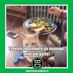 Buon appetito! #bastardidentro #gatto #tavolo #ipnoticamentebastardidentro www.bastardidentro.it